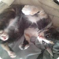 Adopt A Pet :: Faith - Aurora, CO