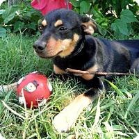 Adopt A Pet :: Kate - Tyler, TX