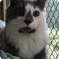 Adopt A Pet :: Sprite - Asheboro, NC