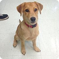 Adopt A Pet :: Benny - Nashville, TN
