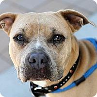 Adopt A Pet :: Chenille - Berkeley, CA
