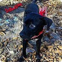 Adopt A Pet :: Dawson - Princeton, KY