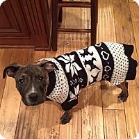 Adopt A Pet :: Marshall - Huntington, NY