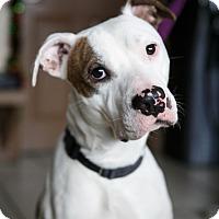 Adopt A Pet :: Marcus - Marietta, GA