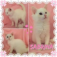 Adopt A Pet :: Sabrina - Jeffersonville, IN