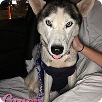 Adopt A Pet :: Gwen - Carrollton, TX