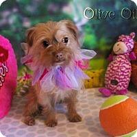 Adopt A Pet :: Olive Oil - Benton, LA