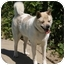Photo 3 - Akita Dog for adoption in Hayward, California - Kinako