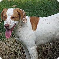 Adopt A Pet :: Buttons - Prairieville, LA