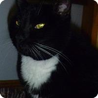 Adopt A Pet :: Bobbi Ann - Hamburg, NY