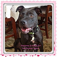 Adopt A Pet :: Awesome - Myakka City, FL
