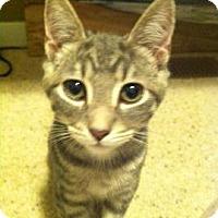 Adopt A Pet :: Hercules - San Jose, CA