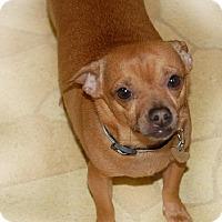 Adopt A Pet :: Bozz 3 1/2 Years - C/S & Denver Metro, CO