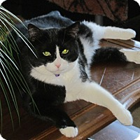 Adopt A Pet :: Sophie - Xenia, OH