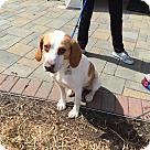 Adopt A Pet :: Freddie