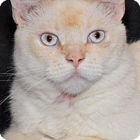 Adopt A Pet :: Sia - Philadelphia, PA