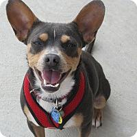Adopt A Pet :: Buster - Buffalo, WY
