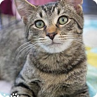Adopt A Pet :: Bernard - Merrifield, VA