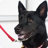 Adopt A Pet :: Kamila - Sparta, NJ