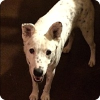 Adopt A Pet :: Wyatt - El Paso, TX