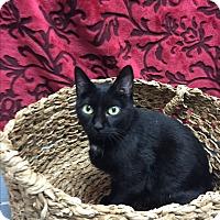 Adopt A Pet :: Katie - Nashville, TN