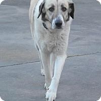 Adopt A Pet :: TEXAS, SPRING: 'LADYBUG' - Little, Rock, AR