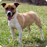 Adopt A Pet :: Zailee - Waldorf, MD