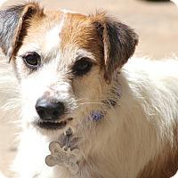 Adopt A Pet :: Essex - MEET HIM - Woonsocket, RI