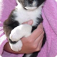 Adopt A Pet :: BILLY JR. - Corona, CA