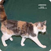 Adopt A Pet :: KASSIE - Hanford, CA