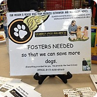 Adopt A Pet :: FOSTER HOMES NEEDED - tampa, FL