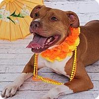 Adopt A Pet :: Peaches - Titusville, FL