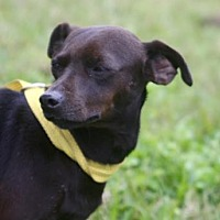Adopt A Pet :: Xena *video - Sugarland, TX