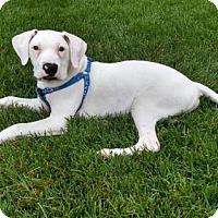 Adopt A Pet :: Axel - Keyport, NJ