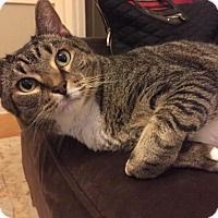 Adopt A Pet :: Archie the dog cat! - Brooklyn, NY