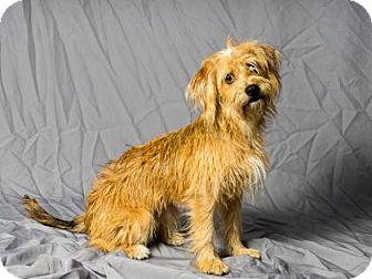 Terrier (Unknown Type, Small) Mix Dog for adoption in Tulsa, Oklahoma - La Melinda