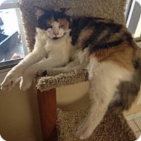 Adopt A Pet :: Belle - Baldwin Park, CA