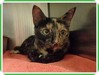Domestic Shorthair Cat for adoption in Marietta, Georgia - TINKER - reclaimed