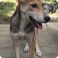 Adopt A Pet :: ASPEN BARKLEY - Waldron, AR
