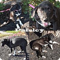 Adopt A Pet :: Paisley - Union City, TN