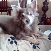 Adopt A Pet :: TODD (LM) - Tampa, FL