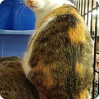 Adopt A Pet :: Skye - Glen Mills, PA