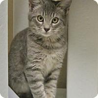 Adopt A Pet :: Thumb - Georgetown, TX