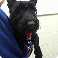 Adopt A Pet :: FLETCHER - Pittsburgh, PA