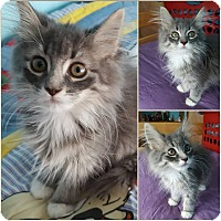 Adopt A Pet :: Zendaya - Hazel Park, MI