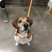 Adopt A Pet :: Syler - Ottawa, KS