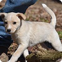 Adopt A Pet :: Frankie - Groton, MA