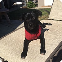 Adopt A Pet :: Raven - BONITA, CA