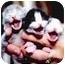 Photo 2 - Domestic Mediumhair Kitten for adoption in Kankakee, Illinois - *VOLUNTEERS NEEDED