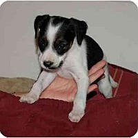 Adopt A Pet :: Benji - Chula Vista, CA